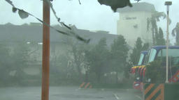 Hurricane, strong wind with rain breaks off the trees from the parking lot, 4K Footage