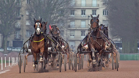 Horse racing, French Trotter, harness racing at racecourse, Caen, Normandy, France Live Action