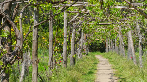 vineyard footpath, passing through path Footage