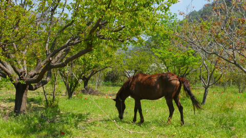 horse grazing at garden Footage