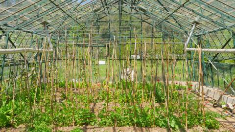 Greenhouse garden, interior Footage