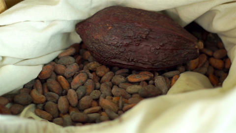 Handheld Bag with Cacao Seeds and Whole Fruit Live Action
