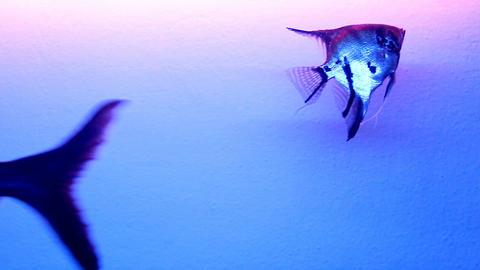 Underwater world Image
