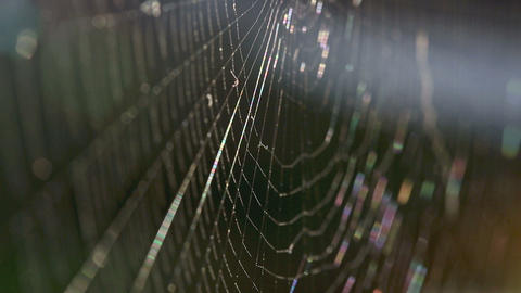 Closeup of a spiders web Footage