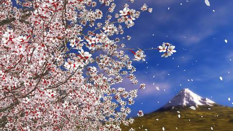 Sakura cherry blossom falling petals and Mt Fuji GIF