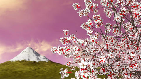 Sakura cherry tree in blossom and mount Fuji Animation