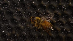 Bees convert nectar into honey Footage