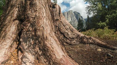Yosemite National Park Reveal Footage