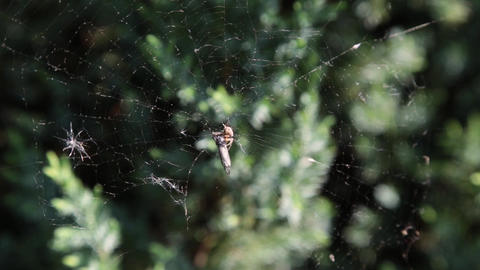 A spider on a web in the forest 영상물