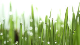 background of dew drops on bright green grass with sun beam Footage