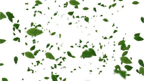 Leaf_BG_Coming CG動画素材