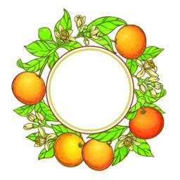 grapefruit vector frame Vector