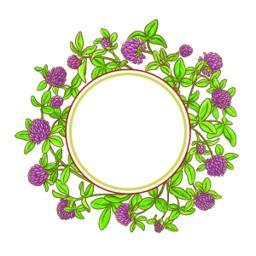 clover branch vector frame Vector