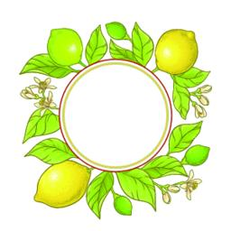 lemon branch vector frame ベクター
