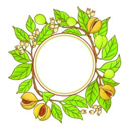 nutmeg branch vector frame ベクター