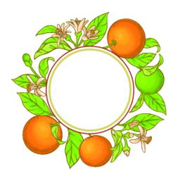 orange branch vector frame ベクター
