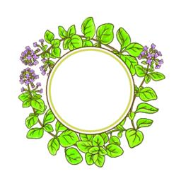 oregano branch vector frame ベクター