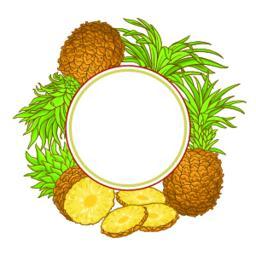 pineapple fruit vector frame ベクター