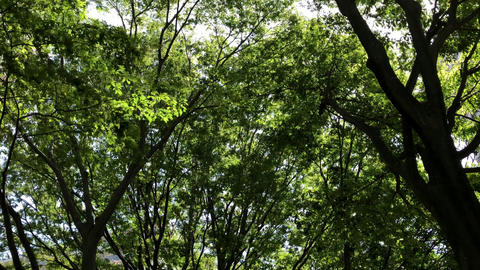 Young leaves swaying in the wind ビデオ