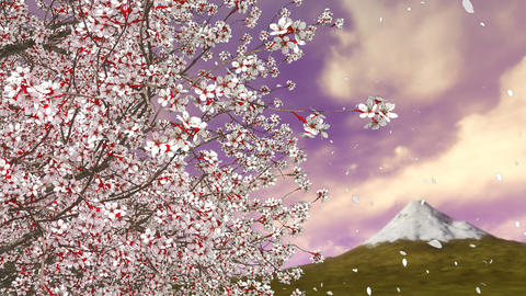 Cherry blossom tree falling petals and Mt Fuji Animation