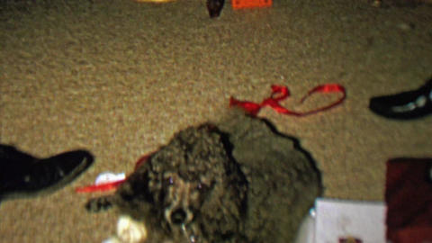 1961: Loving poodle dog comes to master for needed petting Footage
