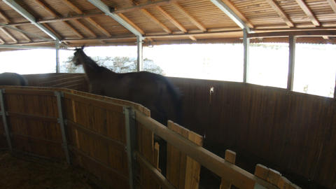 Horses running in walking exercise machine in stables Footage