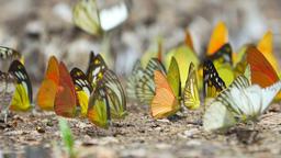 Beautiful butterflies, landscape GIF