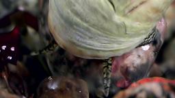 Sea marine snail close up underwater on seabed White Sea Footage