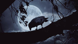 Raven sitting on the branch at night full moon 2 Footage