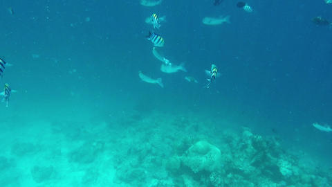 Fishes and Colorful Corals at the Beautiful Tropical Island of Maldives in Archivo