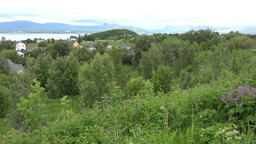 North Europe Norway Saltstraumen green meadows and trees in the fjord GIF
