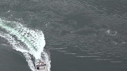 North Europe Norway Saltstraumen boat goes to one of the tide vortices GIF