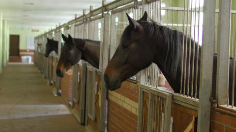 Horses in stable, interior Footage