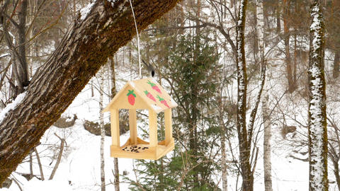 Bird feeder in the park 영상물
