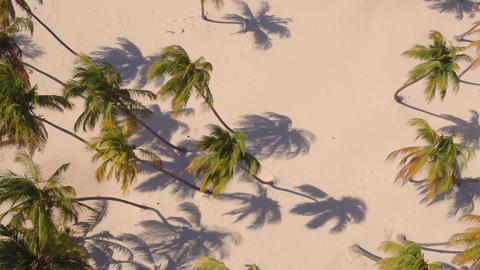 Palm trees on the beach view from above フォト