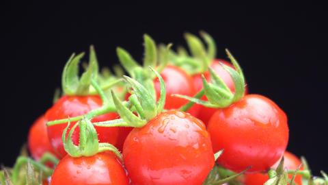 Matt's Wild Cherry Tomato Rotate on Black Background Stock Video Footage