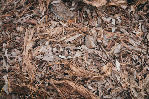 Background of bark and leaves フォト