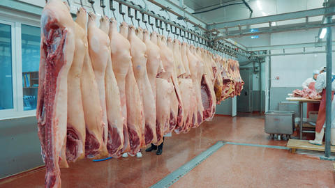 pork carcasses hang on sausage production, meat cutting, sausage making, meat GIF