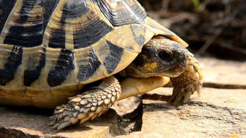 tortoise Live Action