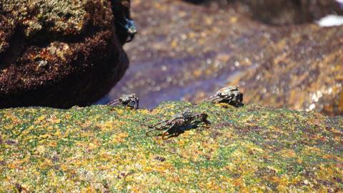 Crabs Feeding Footage