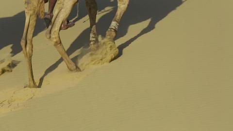 Striding camels Footage