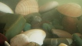 Sea Bottom With Rocks And Shells 03 stock footage