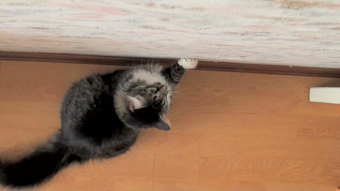 Jump of a cat Stock Video Footage