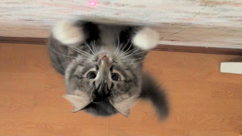 Jump of a cat Footage