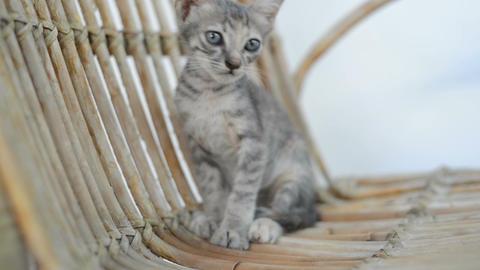 Kitten stock footage