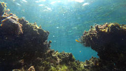 Underwater, view between reef Footage