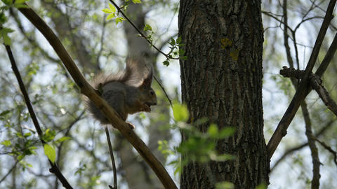 squirrel sits on a tree branch Stock Video Footage