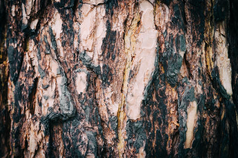 Dry texture of the bark of a tree in the forest フォト