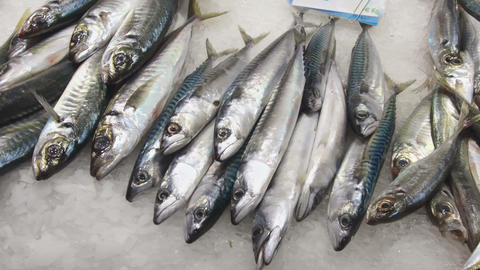 Different oily fish rich in OMEGA-3 on ice 영상물