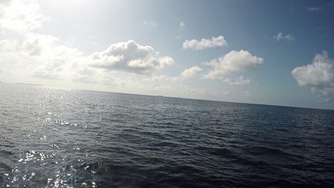 Dolphins Swimming and Playing Near The Boat While Cruising in Indian Ocean at Archivo